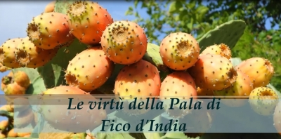 Salute e bellezza con il Fico d'India